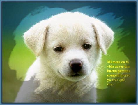 imágenes muy graciosas de animales fotos con frases de animales archivos fotos de frases