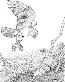 wildlife coloring pages wildlife coloring pages 6357 bestofcoloring
