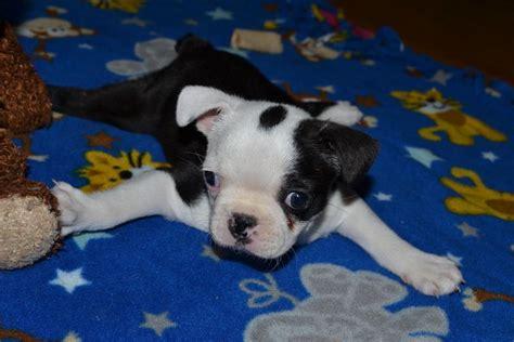 swimmer puppy swimmer puppy