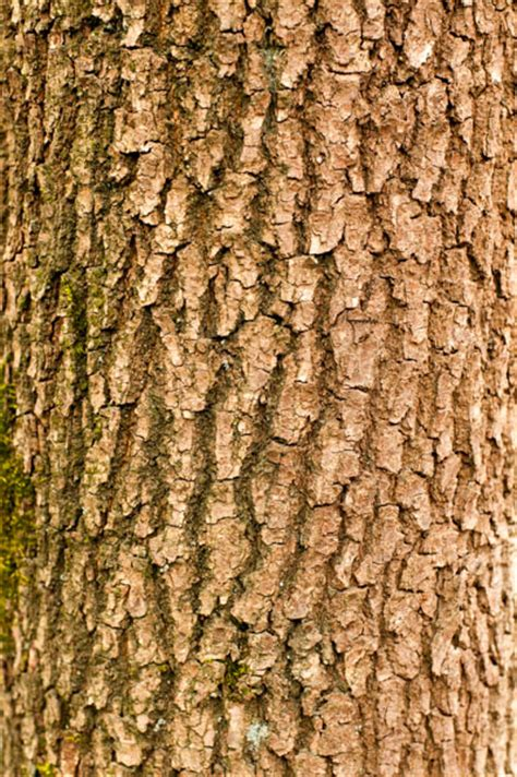 branch tree bark texture pattern pictures free textures