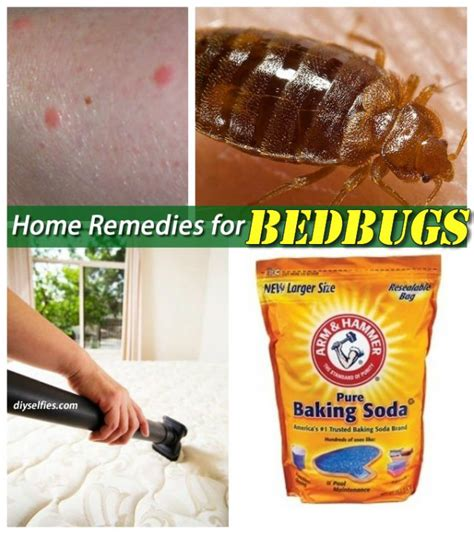 home remedy bed bugs 736 best images about bed bug on pinterest bed bug spray