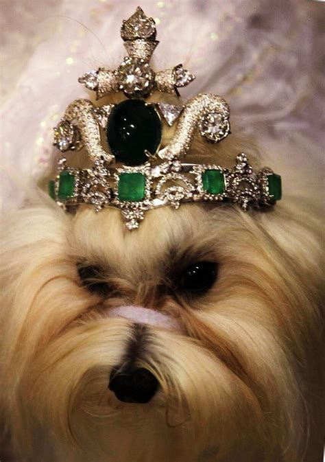 7 Dogs That Make The Best Accessories by Top 10 Most Expensive Pet Accessories In The World