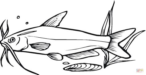catfish coloring page catfish 8 coloring page free printable coloring pages