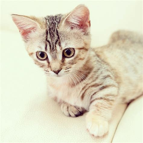 cat instagram cutest cats on instagram images