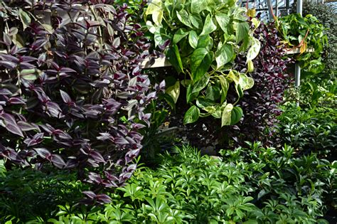 common tropical plants 7 great plants to create a tropical feeling in your