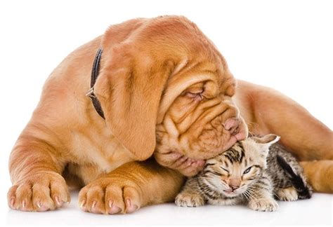 how to a cat and to get along dogs and cats learning to get along