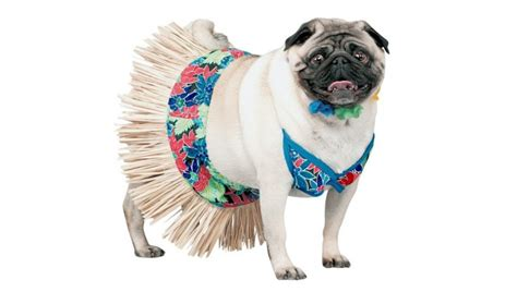 pug bathing suit sento bathhouses in japan what not to do