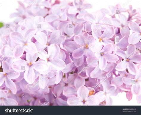 Lilca by Lilca Closeup View Background Stock Photo 82436410