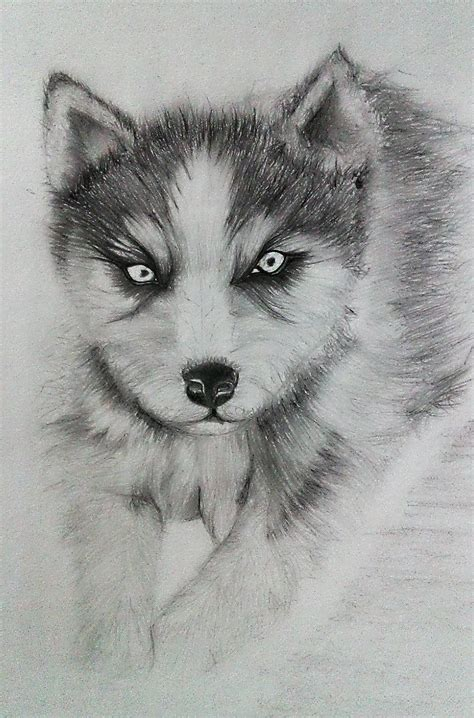 husky puppy drawing siberian husky puppy drawing by syamanthra on deviantart