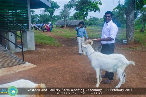 sheep swine and poultry embracing the history and varieties of each the best modes of their feeding and management together with the remedies for each classic reprint books livestock poultry farm opening ceremony of