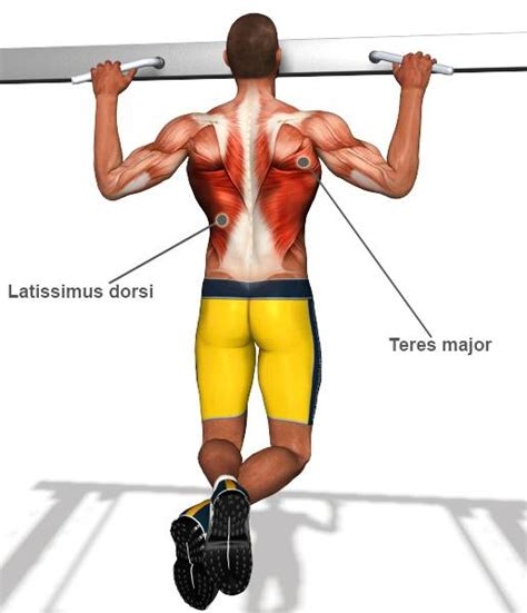 best lat exercises lat exercises www pixshark images galleries with a
