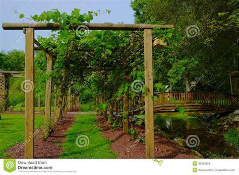 How To Build An Arbor Trellis Path In Grape Arbor Stock Photos Image 33329653