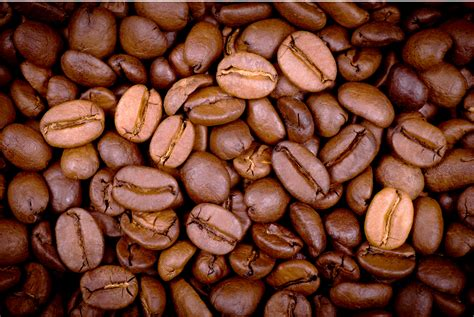 Coffee Bean Arabica Toraja 500gr arabica