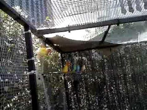 voliere da giardino voliera da giardino stupenda