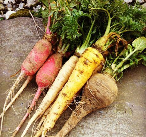 skinned root vegetable 187 root vegetables makeup esthetics