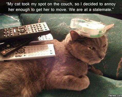 sofa that cats won t funny animal pictures of the day 21 pics
