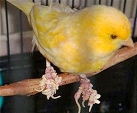 Salep Jamur Daktarin cara uh mengobati jamur di kaki burung kicau kicaukan