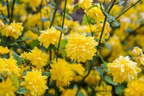 shrubs to prune for better flowers gardenersworld com