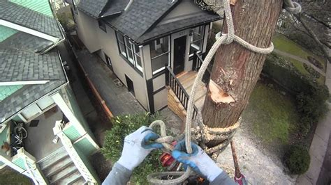 cutting a tree down in sections how to rig sections of trunk onto itself arborist