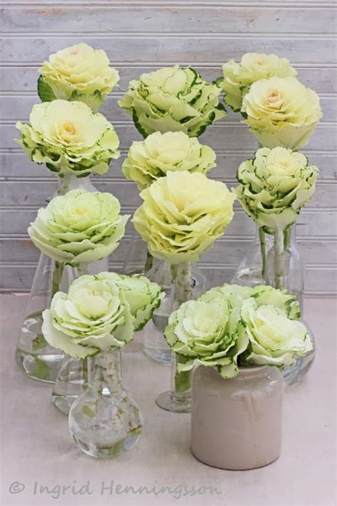ornamental cabbage buy of spring and summer floral styling simple flower