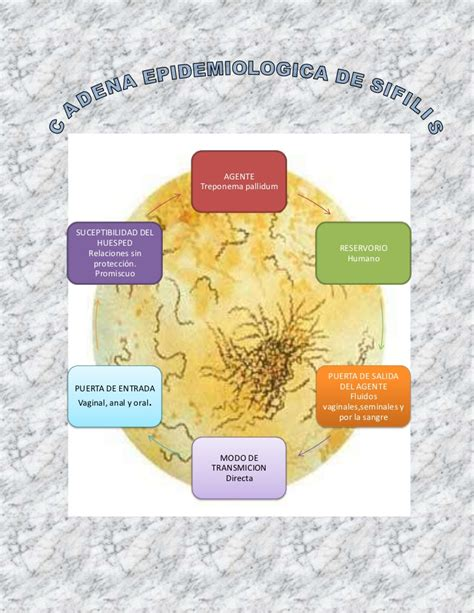 cadena epidemiol 243 gica s 237 filis - Cadena Epidemiologica Sifilis
