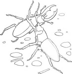 japanese beetle coloring page elephant stag beetles coloring page free printable