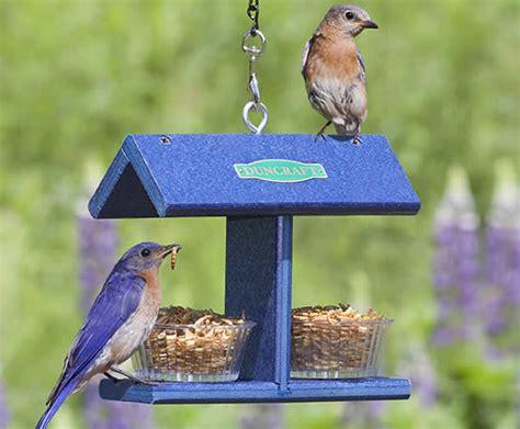 duncraft com ez bluebird feeder