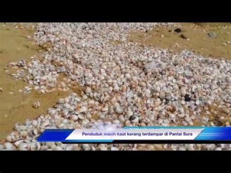 Kerang Dara Mentah By Doyan Ikan kerang yang bergerak di pasir doovi