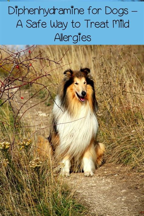 diphenhydramine for dogs diphenhydramine for dogs a safe way to treat mild allergies dogvills