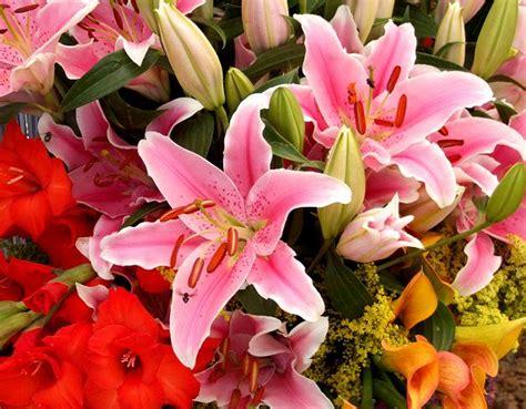 E M O R Y Fleurs 17emo122 161 flores para cumplea 241 os regalar flores f 225 cil y r 225 pido flor arte
