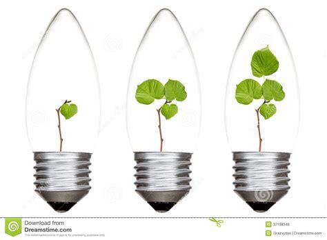 light bulbs good for plants plants growing inside the light bulbs stock photo image
