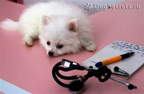adenovirus in dogs the most common infectious diseases in dogs