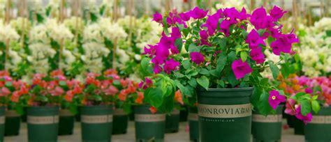 order monrovia plants