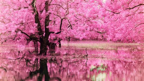 wallpaper pink trees amazing pink background images design trends premium
