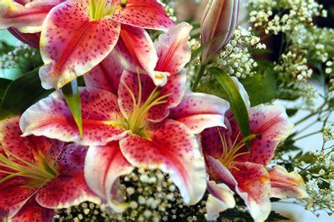 imagenes bonitas de paisajes con flores paisajes de flores hermosas imagui