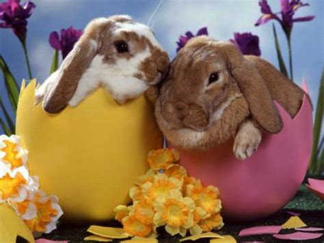 cute rabbit themes fun and colorful easter themes for chrome firefox and
