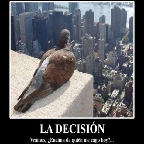 imagenes graciosas chidas imagenes chidas y chistosas de aves imagenes bonitas