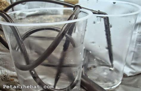 Fertigasi Dan Hidroponik hidroponik dengan sistem fertigasi petani hebat