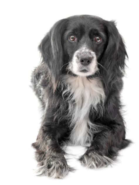 xylitol dogs the dangers of xylitol in dogs