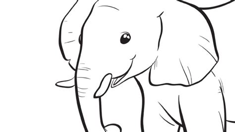 elephant trunk coloring page baby animals series baby elephant grandparents com