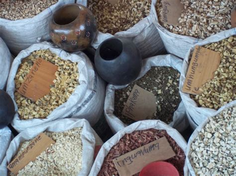 traditional medicine a south ethnobotanist breathes into plant