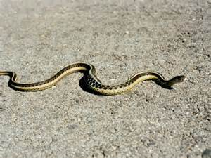 snakes are for your garden a healthy for me