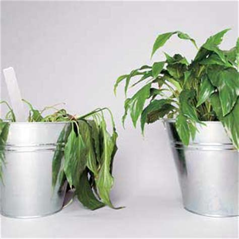 plants easy to grow indoors how to promote optimal plant growth pure nutrients