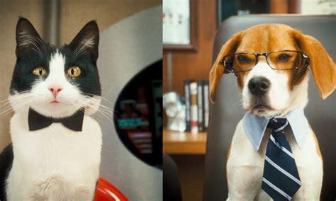 imagenes de kitty galore im 225 genes de como perros y gatos la revancha de kitty