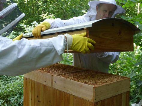 was heißt dach auf englisch onebox hives aus gro 223 britannien mellifera e v