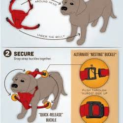 how to put harness on how to put on a harness visual ly