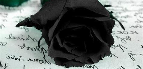 imagenes de rosas azules y negras rosa negra im 225 genes y fotos