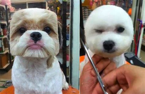 round face dog cut what never seen a dog with a perfectly round or square