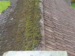 patio moss removal roof moss removal and roof cleaning services across scotland