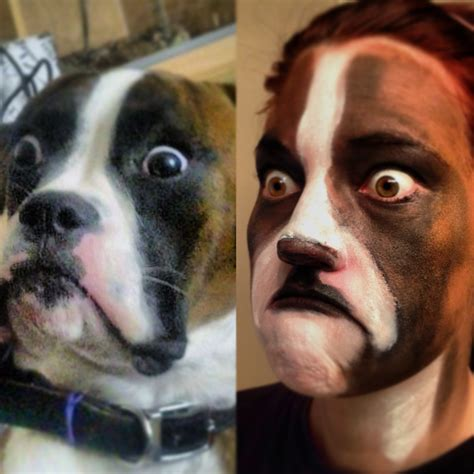 boxer dog meme and then the baffled boxer dog quotes